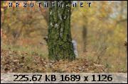 dafota.2.8jf1382985732p.jpg.smmoje zdjęcia 137.jpg&th=3874