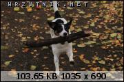 dafota.2.qlr1446406598d.JPG.sm180.JPG&th=6086